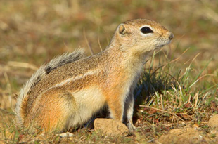Nelson
